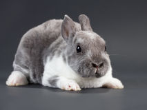 Rabbit. Stock Photo