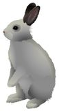 Rabbit. Gray rabbit with brown ears, stands on a white background Royalty Free Stock Image