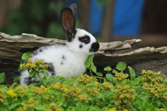 Rabbit. Little rabbit in the grass Stock Images