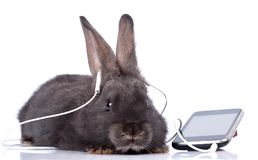 Rabbit. A rabbit and headphone, isolated on white Royalty Free Stock Photography