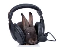 Rabbit. A rabbit and headphone, isolated on white Stock Image