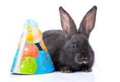 Rabbit. A rabbit with a hat, isolated on white stock photography