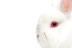 Rabbit. On white, highkey closeup with focus on eye over white royalty free stock photos