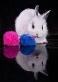 Rabbit. Little white rabbit to play with colored balls stock photography