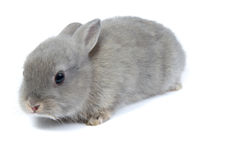 Free Rabbit Royalty Free Stock Image - 23245236