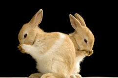 Rabbit Stock Photography