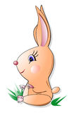 Rabbit. Sitting on a grass, on white background Royalty Free Stock Images