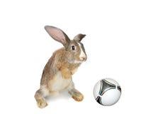 Rabbit, Stock Image