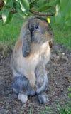 Rabbit. Photograph of a rabbit in gareden Stock Image