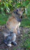 Rabbit. Photograph of a rabbit in garden Royalty Free Stock Photos