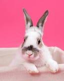 Rabbit Royalty Free Stock Image