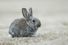 The rabbit Stock Photos