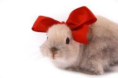 A rabbit Royalty Free Stock Image