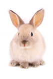 A rabbit stock images