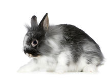 Rabbit Stock Photo