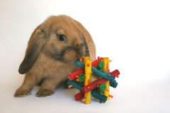 Rabbit. A pet rabbit with a toy Stock Photos