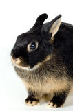 Rabbit. On a neutral background Stock Images