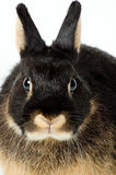 Rabbit. On a neutral background Royalty Free Stock Photo
