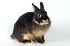 Rabbit. On a neutral background Royalty Free Stock Image