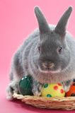 Rabbit. On pink background with easter eggs Royalty Free Stock Photos