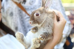 Rabbit royalty free stock images