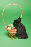 Rabbit. Black rabbit is near to a basket with Easter eggs Royalty Free Stock Photography