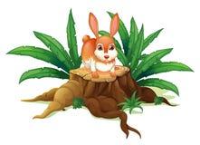 A rabbit above a trunk Stock Photo