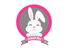 Rabbit with adopt me message Royalty Free Stock Photos
