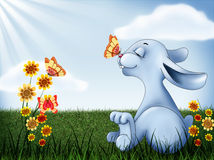 Rabbit adventure Stock Photos