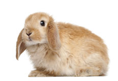 Rabbit against white background Stock Photos