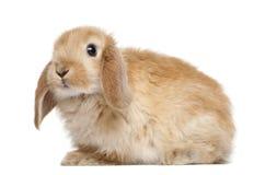 Rabbit against white background Stock Photos