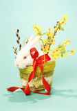 Rabbit albino Royalty Free Stock Photo