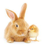 Rabbit And Chicken Royalty Free Stock Photo