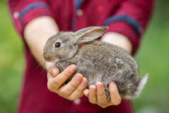 Rabbit. Animal in man hands Royalty Free Stock Image