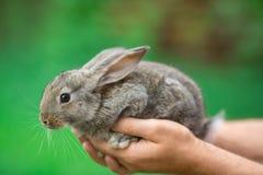 Rabbit. Animal in man hands Stock Photo