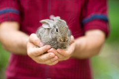 Rabbit. Animal in man hands Stock Images