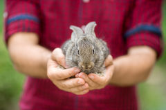 Rabbit. Animals and people Stock Photos