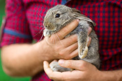 Rabbit. Animals and people Royalty Free Stock Photos