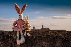 Rabbit, Animals, Pet, Children Toys Stock Images