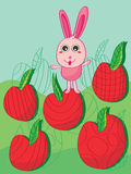 Rabbit Apple Land Royalty Free Stock Image