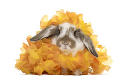 Rabbit in artificial flowers, isolated Royalty Free Stock Photo