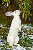 Rabbit in autumn Stock Photos