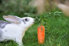 Rabbit. Baby rabbit in grass. Summer day Stock Image