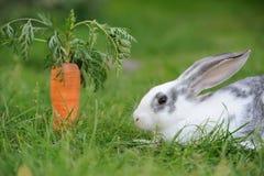 Rabbit. Baby rabbit in grass. Summer day Stock Photos