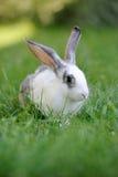 Rabbit. Baby rabbit in grass. Summer day Stock Photo