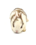 Rabbit. Baby of white and brown rabbit on white background Royalty Free Stock Image