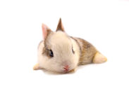Rabbit. Baby of white and brown rabbit on white background Royalty Free Stock Photos