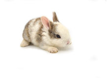 Rabbit. Baby of white and brown rabbit on white background Stock Image