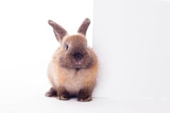 Rabbit with banner. Royalty Free Stock Photo