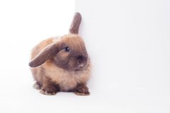 Rabbit with banner. Royalty Free Stock Photography